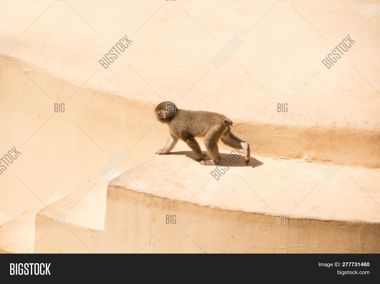 Rome, Italy - May 31, Image & Photo (Free Trial) | Bigstock
