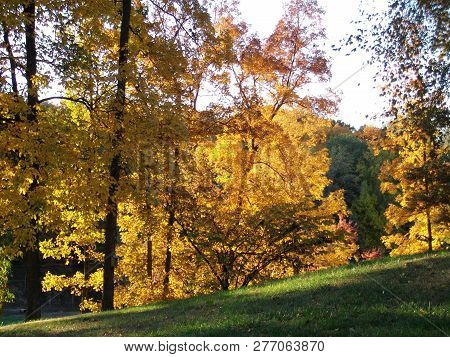 Vibrant Yellows And Oranges Color The Trees On An Autumn Afternoon In Kentucky