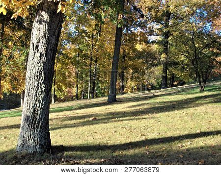 The Sun Casts Long Shadows On A Wooded Hillside On An Early Autumn Afternoon In Rural Kentucky.
