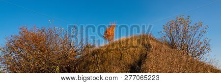 Lonely Tree With Yellow And Orange Autumn Foliage Against A Blue Sky On A Hillside. Sunny Day.banner