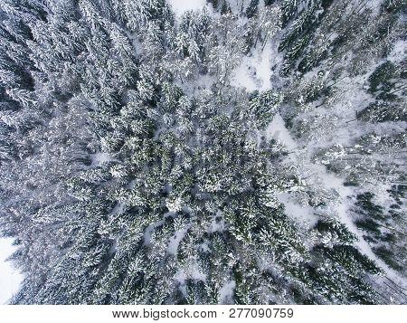 View Of Snowed Trees In Somport, Huesca, Spain