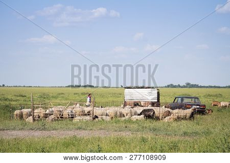 Alibunar, Serbia - June 6, 2015: Shepherdess Standing In The Middle Of A Herd Of Goats In A Pasture