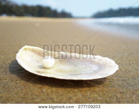 Sea shell on the sandy beach of Goa, India