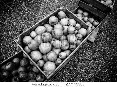 Apples In Wooden Boxes, Detail Of Fresh Fruit, Diet And Health