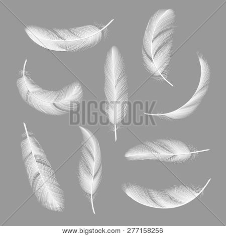 Feathers Realistic. Flying Furry Weightless White Swan Objects Vector Isolated On Dark Background. F