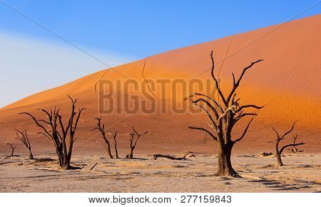 Beautiful Morning Colors And Dead Acacia In Hidden Dead Vlei Landscape In Namib Desert, Dead Acacia