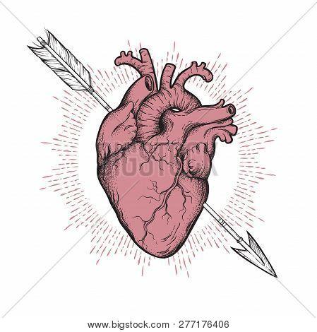 Human Heart Pierced With Cherubs Arrow Hand Drawn Line Art And Dotwork. Flash Tattoo Or Print Design