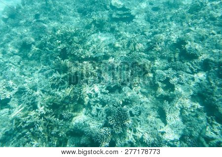 Tropical Finding Fish Coral Reef Underwater Life