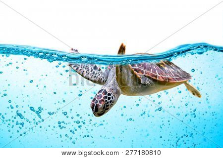 Sea turtle swims under water isolated on white