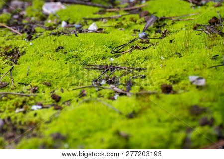 Beautiful Green Moss On The Floor, Moss Close-up, Macro. Beautiful Background Of Moss For Wallpaper.