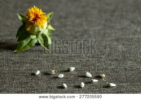 Shallow Depth Of Field. Safflower Dyeing: Seeds And Flower Of Yellow Color Against The Background Of