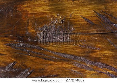 Wood Texture Of Cut Tree Trunk, Close-up.