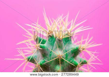 Cactus Fashion Design. Minimal Stillife. Trendy Bright Colors. Green Neon Mood On Pink Background