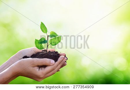 Hands holding a green young plant .New life in hands.