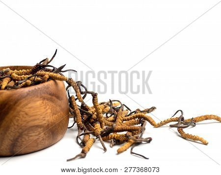 Close up Cordycep sinensis (CHONG CAO) or mushroom cordyceps on Wooden bowl on isolated background. Medicinal properties in the treatment of diseases. National organic medicine. poster
