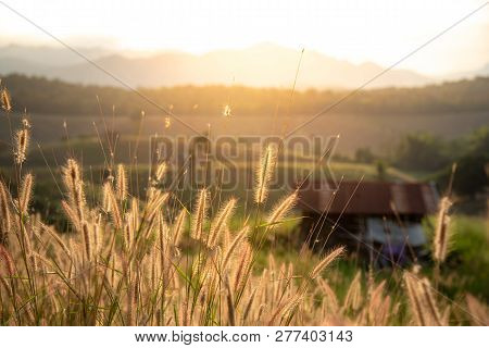 Beautiful Grass Field With Blurred Rural Cottage And Mountain Landscape In The Background During The