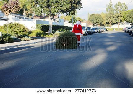 Sad Santa Claus. Santa Claus is sad as he drags a dead dried out Christmas Tree to the curb to be recycled in January. Santa Crying. Santa is Sad.