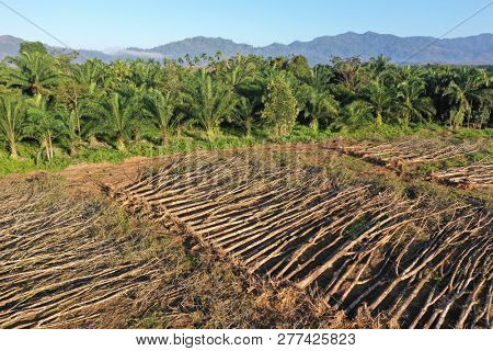 Deforestation and palm oil plantations in Thailand