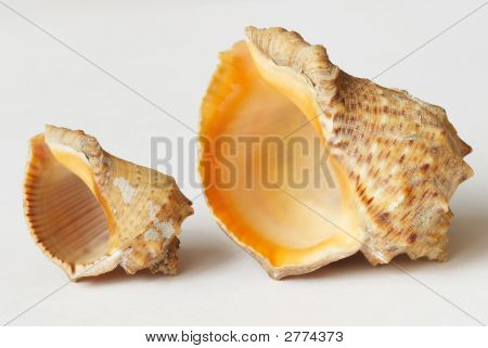 Macro of Big and small sea shells on the background poster