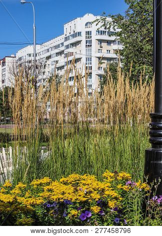 Urban Landscape Design With Summer Flowers And Feather Grass