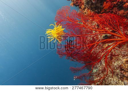 Underwater In The Lembeh Strait In Sulawesi, Indonesia