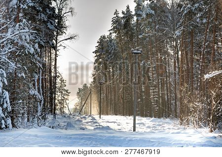 Deforestation, Junction Of Power Lines. Glade For Power Line. Winter Forest After Snowfall. Snow Fal