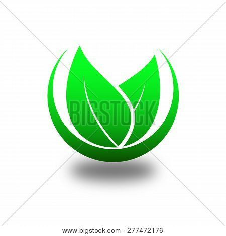 Green Leaf Isolated On White. Green Leaf Vector Icons. Spring Leaves Ecology Symbols. Green Leaf And