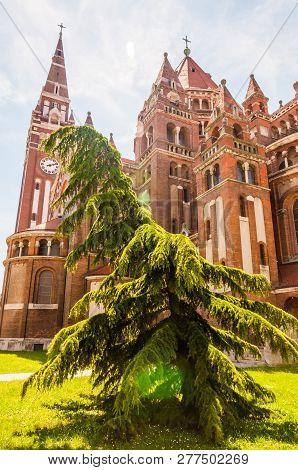 Szeged, Hungary - June 18, 2013: Emotional Shape Of Evergreen Conifer Tree Growing Near The Votive C