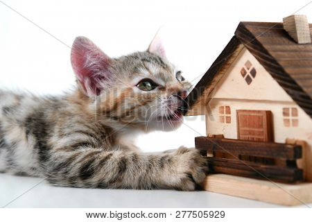 Kitten plays a model house on white background