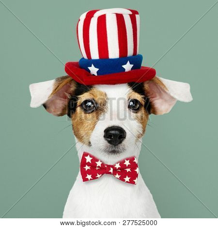 Cute Jack Russell Terrier in Uncle Sam hat and bow tie poster