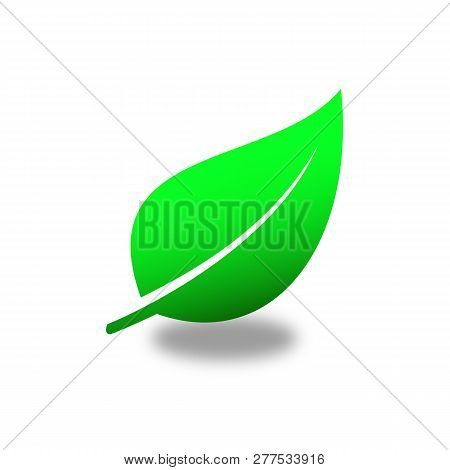 Green Leaf Vector Icons. Collection Green Color. Spring Leaves Ecology Symbols. Green Leaf And Sprin