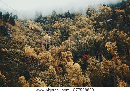 A Hillside Overgrown With Plenty Of Autumn Colored Trees: Birches, Cedars, Pines, Firs Etc. With Low