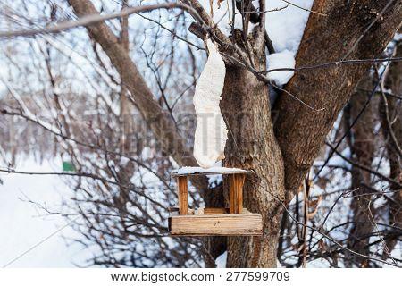 Pork Skin With Lard Over Wooden Wild Bird Feeder On A Tree In Urban Park In Winter Twilight