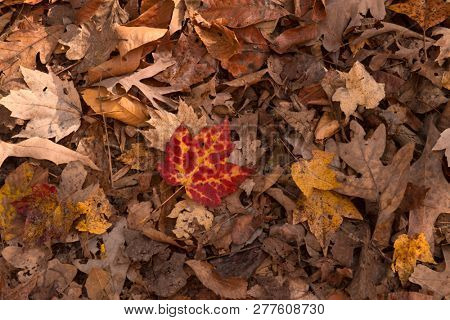 Fallen leaves signifying end of autumn season
