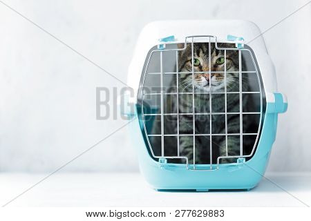 Gray Cat In A Cage For Transportation. Carrying For Animals. Relocation And Animal Transportation Co