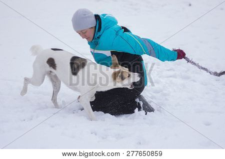 Mature Woman Playing With Mixed Breed Dog Hiding A Rope At Winter Season