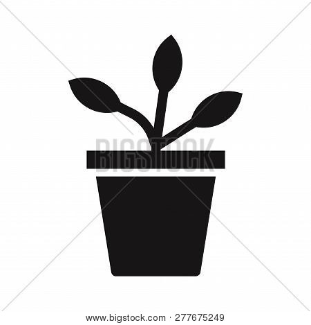 Potted Plant Icon Isolated On White Background. Potted Plant Icon In Trendy Design Style. Potted Pla