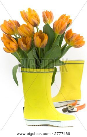 Little Rain Boots And Fresh Tulips