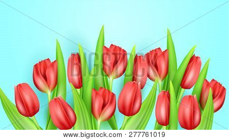 Spring Flower Beautiful Background With Realistic Tulips. Vector Stock Illustration. Greeting Spring