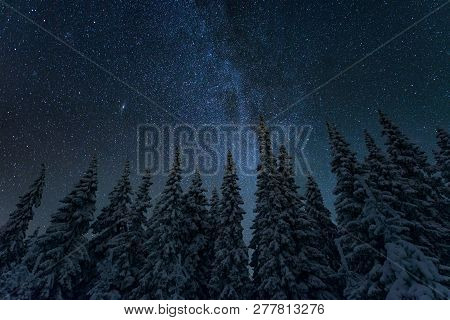 Winter Night Landscape With Trees And Starry Sky In Finland