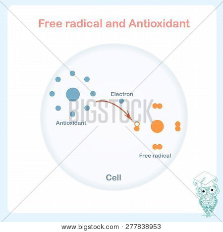 Antioxidant Working Principle Abstract Vector Sheme, Illustration Of Process Of Electron Donation To