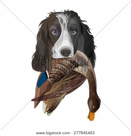 English Springer Spaniel Dog With Mallard Duck In Its Mouth. Vector Illustration Isolated On White B