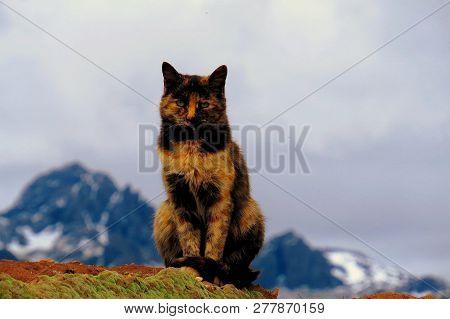Gato Multicolor En Primer Plano Y De Fondo Las Montañas