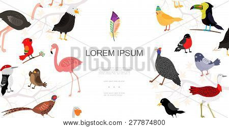 Flat Birds Colorful Concept With Ostrich Bullfinch Canary Peacock Crane Flamingo Woodpecker Stork Cr