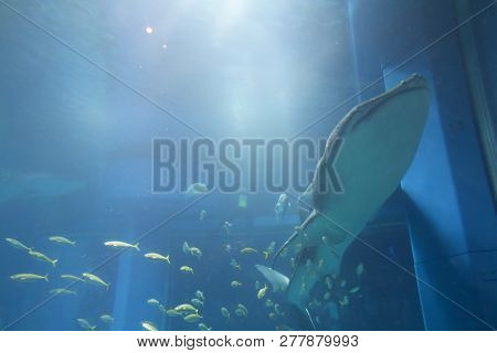 At The Osaka Aquarium Kaiyukan In Osakae