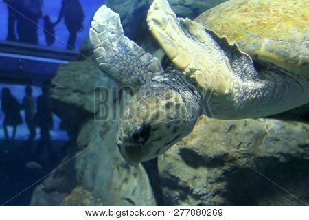 The Osaka Aquarium Kaiyukan In Osaka, Japan