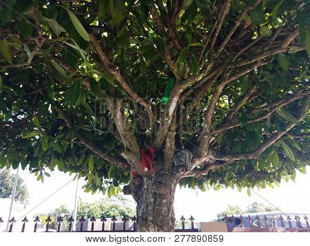 Rags Or Cloth And Bottles In Tree Branches In Puerto Rico