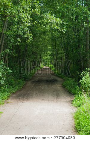 View Of A Dirt Street In The Middle Of A Tunnel Of High Trees