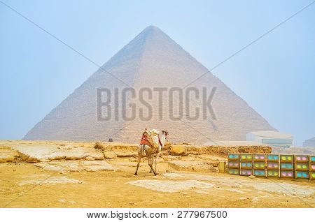 The Lonely Camel Stands At The Lighting Equipment For The Night Show And The Khufu Pyramid On The Ba