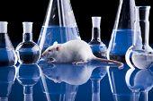 Animal Laboratory poster